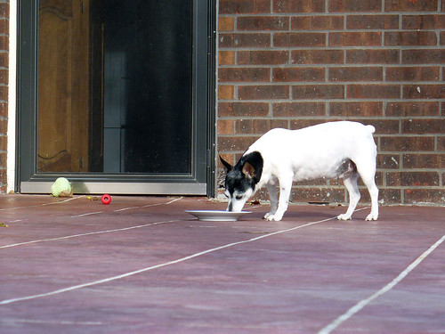 2009-09-30 - Dogs - Outside - 0009