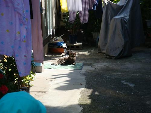 Today's Cat@20091004