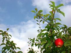 Again Fall ...2 (Ebrahim Baraz) Tags: sky apple mashhad  khorasan    golmakan   baraz