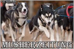 Schlittenhunde im Arabergestüt & Tierpark Ströhen