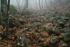 (Eiji Murakami) Tags: autumn japan sigma   nara foveon  odaigahara dp2