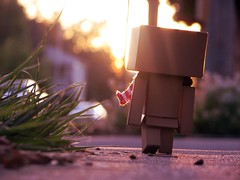 Follow the Sunset (willycoolpics.) Tags: sunset scarf dof bokeh follow tones picnik danbo revoltech danboard imnottoogoodwithtitles
