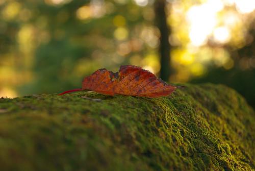 一枚の葉 / a leaf