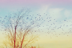 Flying To Dream Land ({peace&love}) Tags: blue red orange tree leaves birds yellow flying colorful no south flock migration sparrows pinkparis1233