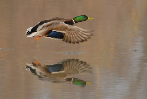 Flying on a mirror