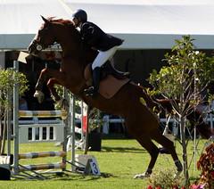 Soaring and Miki vd Merwe (neulands) Tags: horses cheval worldcup pferde glenellen showjumping springen