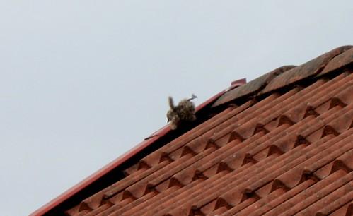 Suicidal Bird