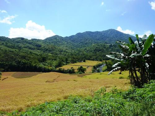 Flores-Moni-Ende- Route (61)