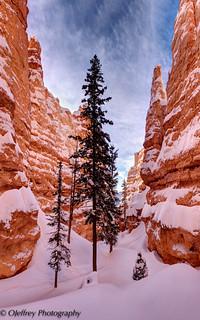 Bryce Canyon Explored