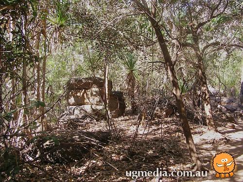 Boiga irregularis habitat