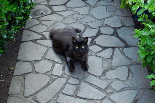 Today's Cat@20090726
