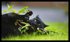 O_o !!! (Edd Noble) Tags: playing nikon f14 85mm stick nikkor craziness d3 marmite kittyschoice