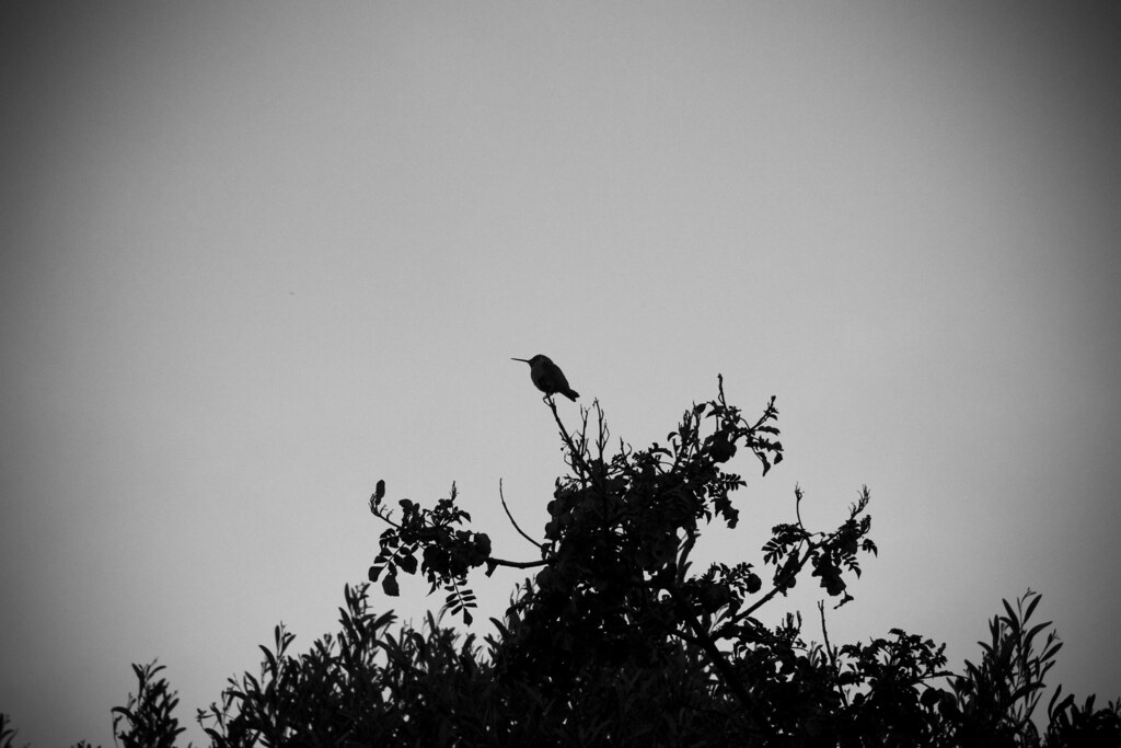 distinct silhouette