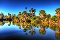 Phoenix Zoo Lake (gbrummett) Tags: blue trees lake water colors phoenix zoo flickrbadge tone canonef1740mmf4lusm highdynamicrange phoenixzoo 1740 phoenixarizona mapped blueskys phoenixaz greatoutdoors iso50 tonemapped photomatixpro tacksharp canon1740f4lusm canonef1740mm14lusm canonites singleexposuretonemapped canon5dmarkii canoneos5dmarkiicamera grantbrummett canon1740f4lzoom singleexposuresingleexposure