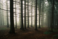 The deep dark woods (Brownthing) Tags: wood trees mist fog forest dark branches czechrepublic trunks pillars canona1 atmospheric autaut