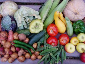 August Vegetables
