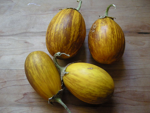 Golden Egg Eggplants