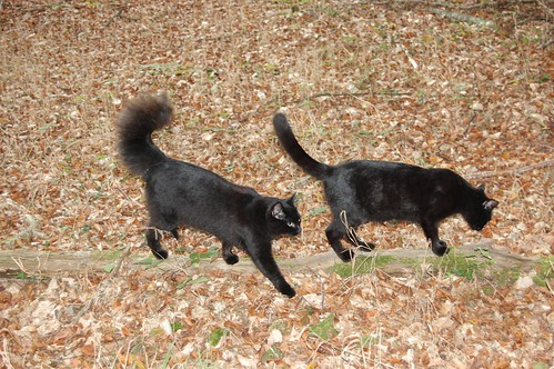 woodland cats