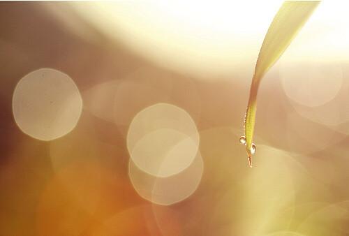 drops-of-jupiter-by-julia-wang