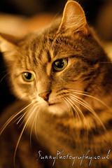 Meet Nemo, my Cat :) (SunnyPhotography) Tags: green cat photography eyes kitten nemo sunny nemoandmum