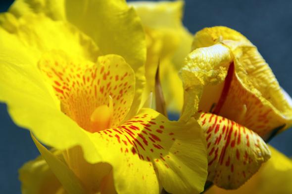 092609_flower_03
