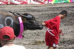 DSC_6299 (kenken4649) Tags: buffalo racing thai chonburi
