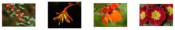 Examples of closeup photos with the Nikon 16-85mm VR lens plus Marumi Achromat Filter, by Tierce