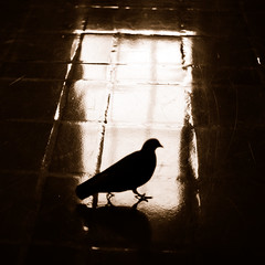 Walking on a dream (.I Travel East.) Tags: california light bird silhouette sepia square hope la losangeles nikon floor walk dove dream naturallight tuesday duotone unionstation cgb bresson lucio decisivemoment losangelescalifornia hcb d700 itraveleast walkingonadream monotoneduotonetuesday