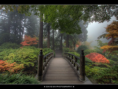 The Bridge at Portland Japanese Garden (David Gn Photography) Tags: bridge fog oregon portland landscape zen pdx mapletree portlandjapanesegarden hdr washingtonpark platinumheartaward platinumpeaceaward
