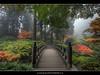 The Bridge at Portland Japanese Garden (David Gn Photography) Tags: bridge fog oregon portland landscape zen pdx mapletree portlandjapanesegarden hdr washingtonpark platinumheartaward platinumpeaceaward