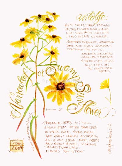 SwampSunflower