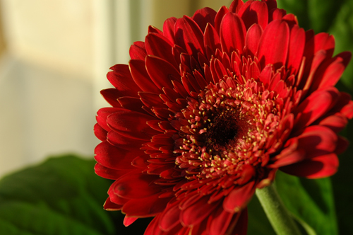 fotos de flores para decorar