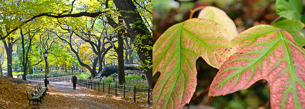 Central Park : NYC