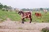 Bull (Marcelo M P Mariano) Tags: foto sp e clube bois nikonf80 fotoclube sigma2470mmf28dgmacro urbanova fisp fujicolorprovalue200 sãojosédoscampossp wwwmarcelompmarianocombr