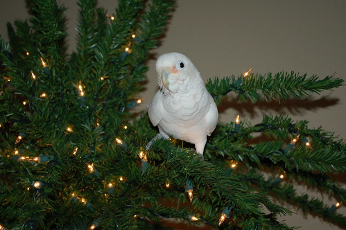 The Night Before Christmas Cockatoo Style