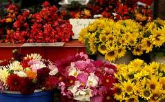 Mainz, Markt, Blumenstand (market, flower stall) (HEN-Magonza) Tags: mainz markt blumenstand flowerstall market rheinlandpfalz rhinelandpalatinate deutschland germany farmersmarket