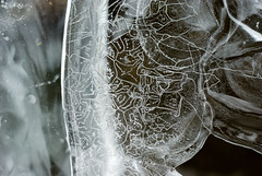 ice formations (nervous system) Tags: ice water map hike platteclove saugertiesny