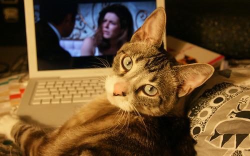 フリー画像| 動物写真| 哺乳類| ネコ科| 猫/ネコ| パソコン/PC|      フリー素材|