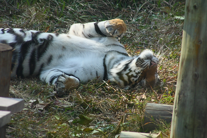 2010壽山動物園0029
