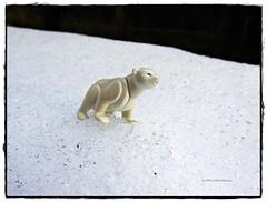 In der Arktis ... (aNNa schramm) Tags: schnee schneelandschaft eisundschnee eiskristalle eisbär