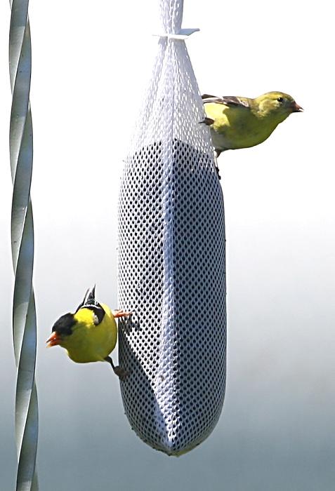 07-01-birds
