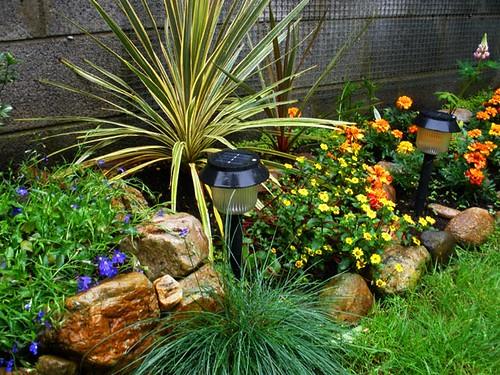 Rainy back garden