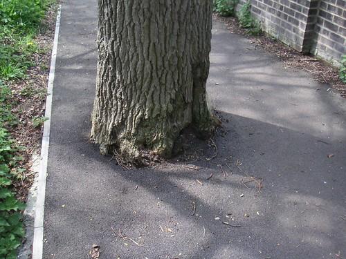 oak-in-path-romsey