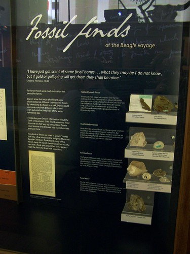 Fossil finds on the Beagle voyage