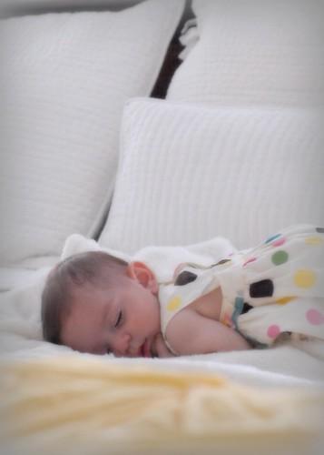 lorice sleeps