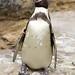 Woodland Park Zoo Seattle 061