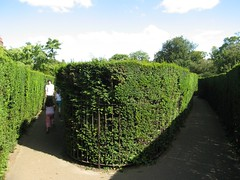 Photo of Hedge Maze