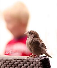 Lil Bird vs Lil Boy (ZiZLoSs) Tags: boy bird canon eos switzerland focus geneva geneve starbucks usm litle aziz 28200mm abdulaziz  f3556 450d zizloss 3azeez  3aziz ef28200mm almanie
