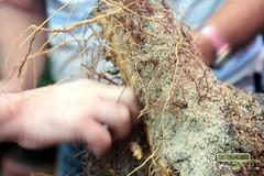Oficina de Bonsai (Projeto Bonsai) Tags: costa arte oficina bonsai tropical trabalho nordeste cabedelo chcara calliandra spinosa nativas tcnicas sergivaldo