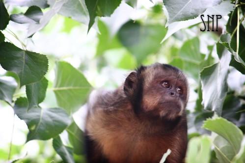 . monkey .